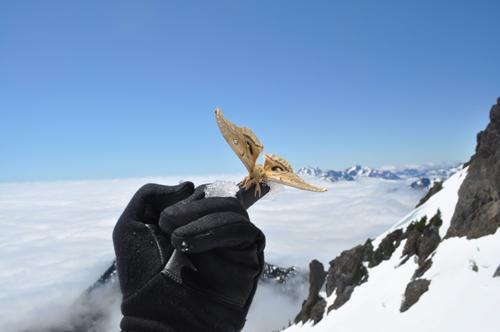 Мужик в штате Вашингтон вчера забрался на гору Братья (2085 м над уровнем моря), а там бабочка. Живая. Вот же ёшкин  .... - Изображение 1