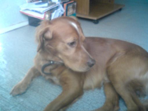 Сёдня у меня умерла собака и у меня слёзы рекой идут. я представить не мог что он умрёт я его любил,а теперь его нет .... - Изображение 1