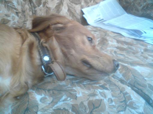 Сёдня у меня умерла собака и у меня слёзы рекой идут. я представить не мог что он умрёт я его любил,а теперь его нет .... - Изображение 2