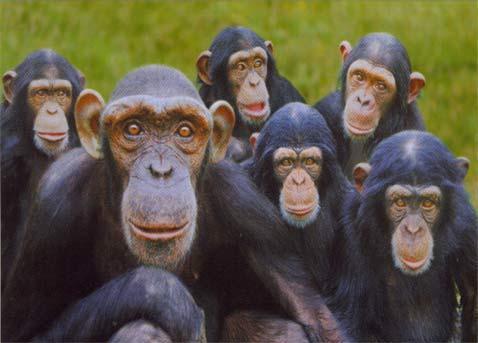 Здравствуйте жители Канобу.Сегодня речь пойдет о Премии Дарвина.  Премия Дарвина («Darwin Awards») — это виртуальная ... - Изображение 1