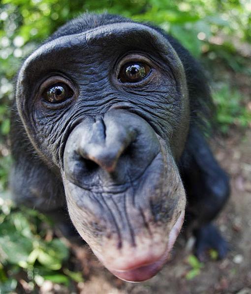 Здравствуйте жители Канобу.Сегодня речь пойдет о Премии Дарвина.  Премия Дарвина («Darwin Awards») — это виртуальная ... - Изображение 2