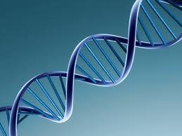 ГМО: вред или польза? - Изображение 1