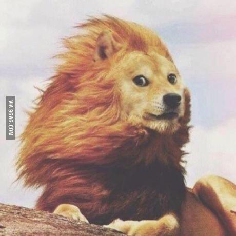 King Doge - Изображение 1