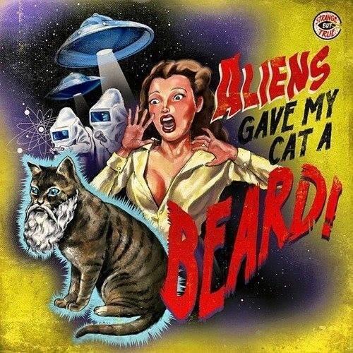 Просто кот с бородой - Изображение 1