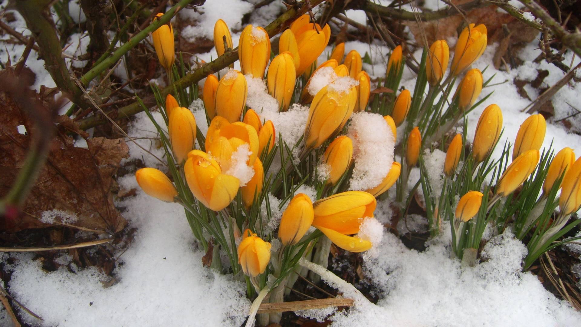#весна  - Изображение 4