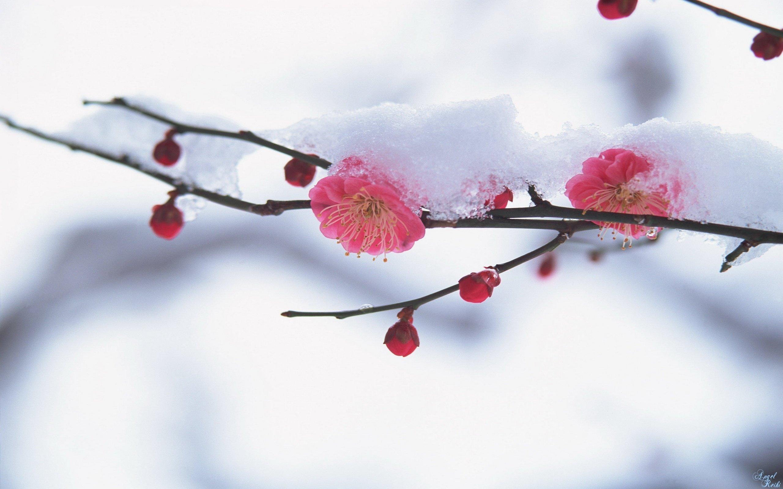 #весна  - Изображение 5