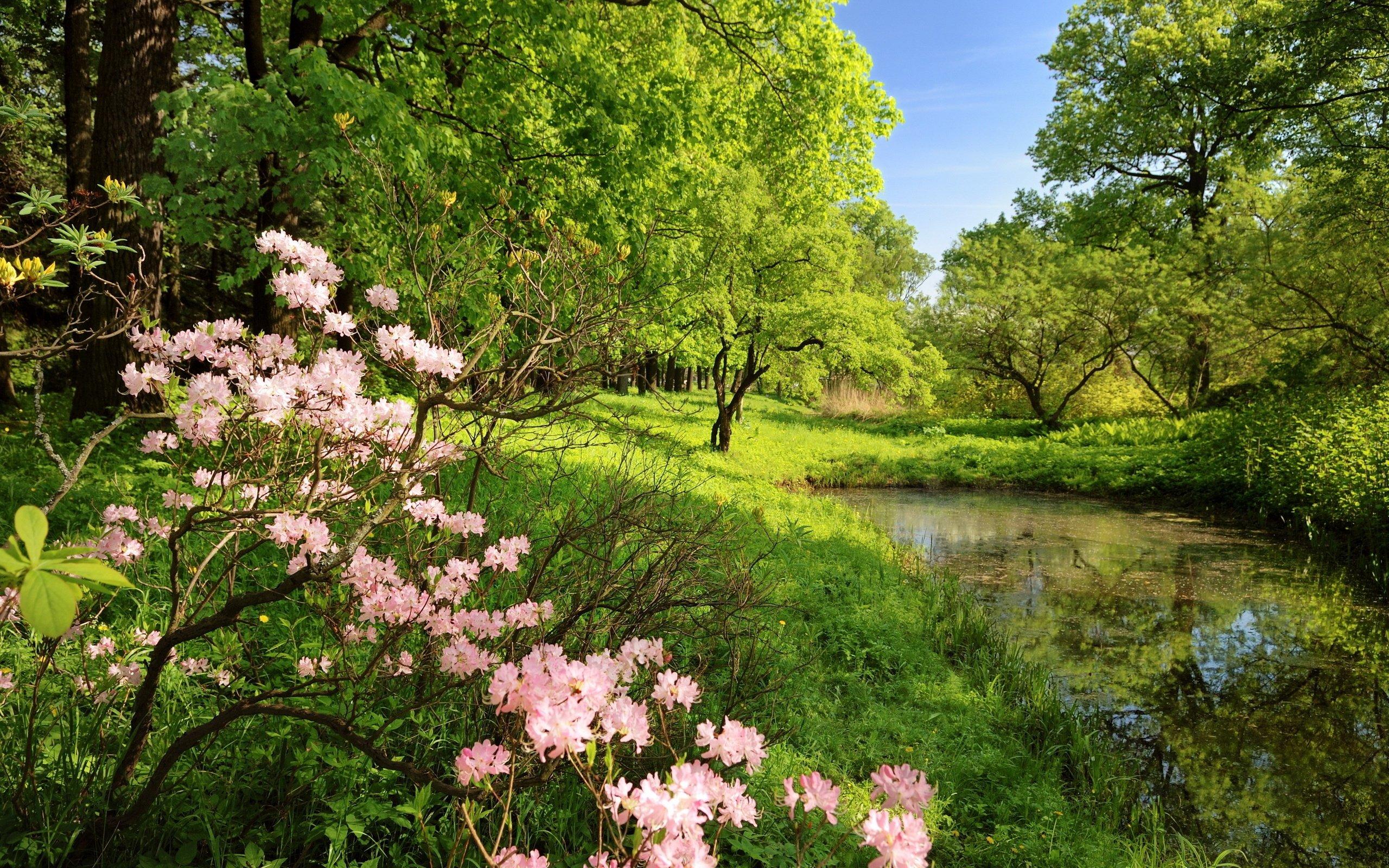 #весна  - Изображение 7