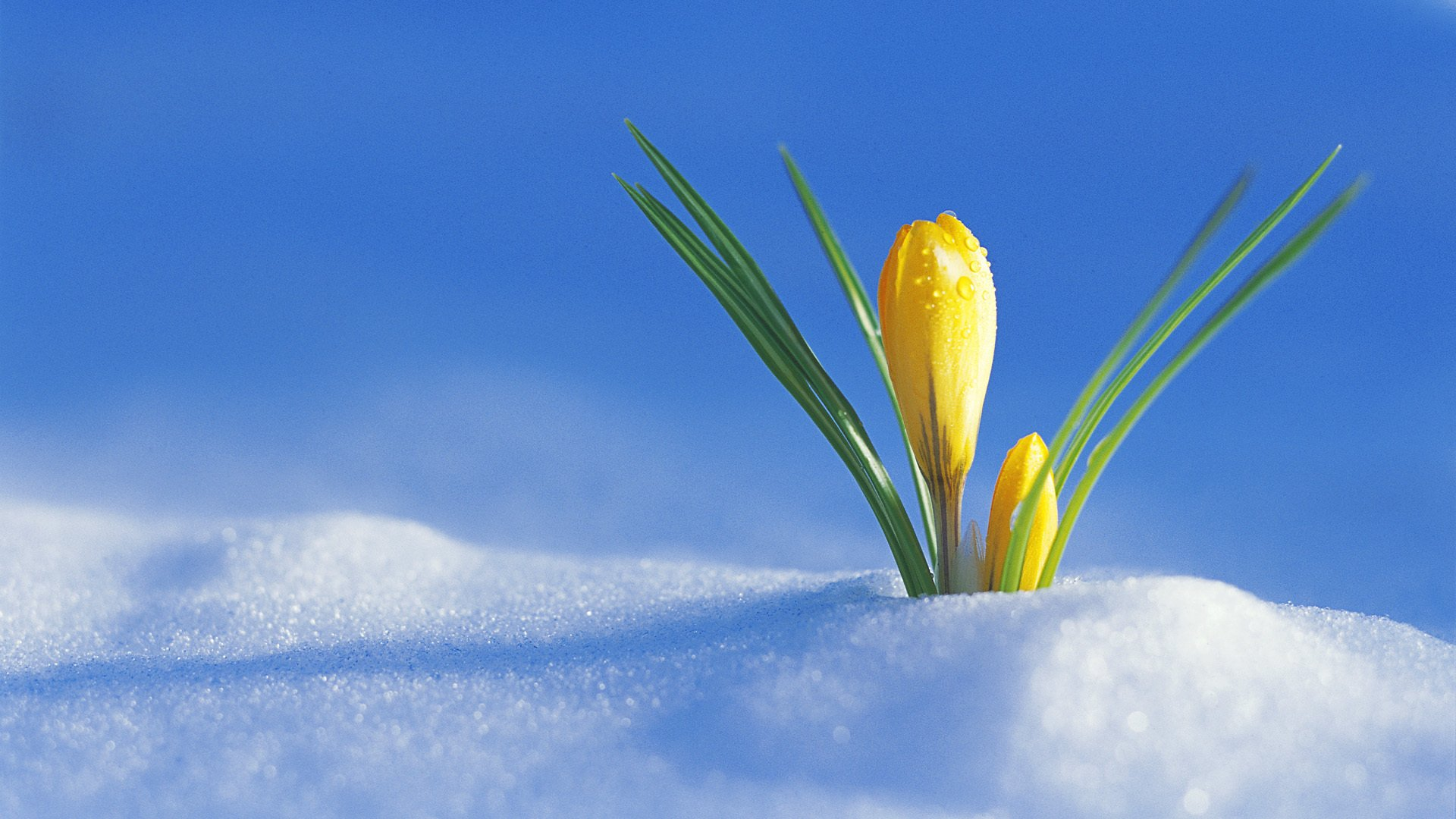 #весна  - Изображение 6