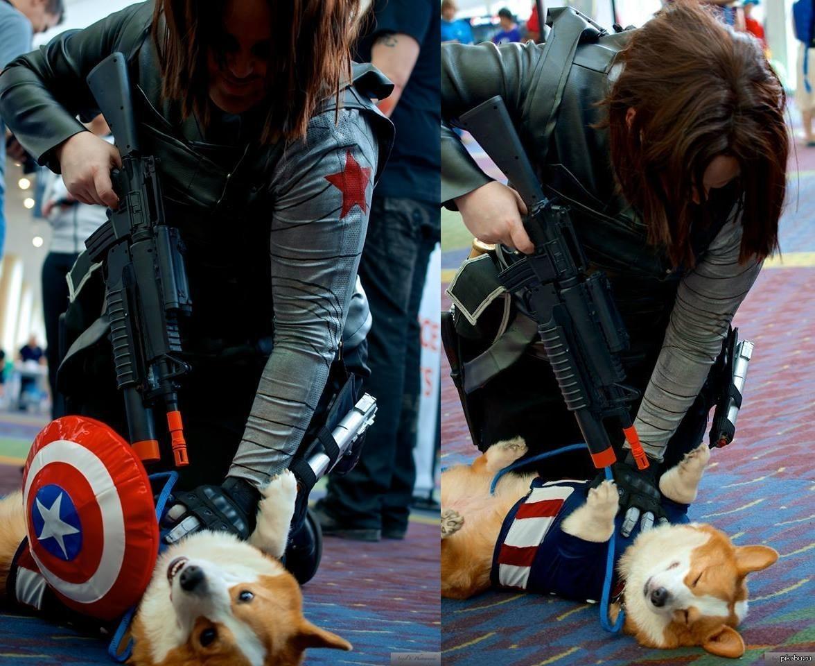 Captain Doge  - Изображение 1