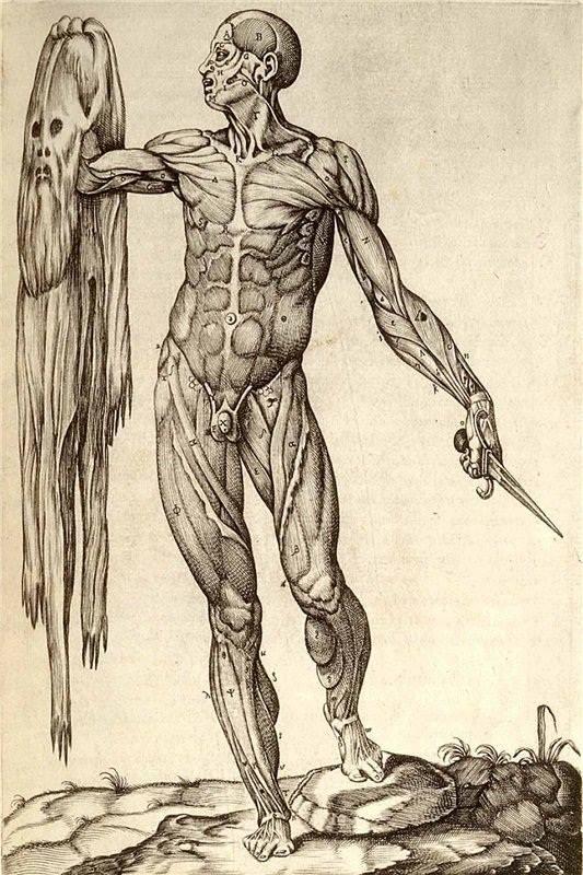 В Гарвардской библиотеке хранятся книги из человеческой кожи - Изображение 1