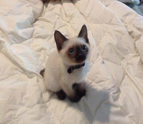 Это просто косплей котенка по имени Гав.   #cosplay  - Изображение 1
