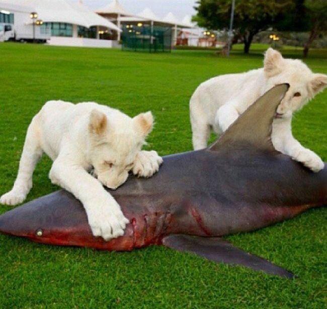 Рыбку котятам - Изображение 1