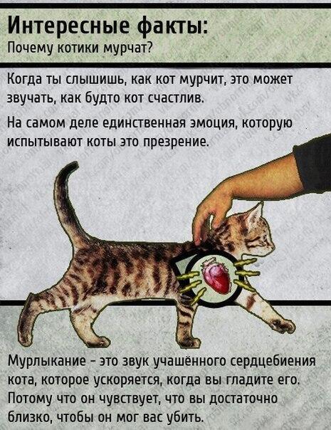 интересные факты, почему кошки мурчат   - Изображение 1