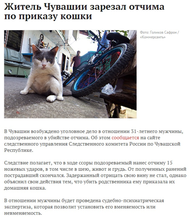 Коты захватят мир  - Изображение 1
