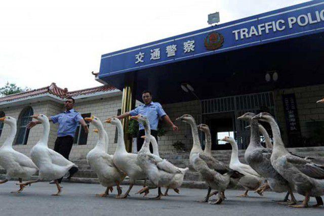Факты о Китае . - Изображение 10