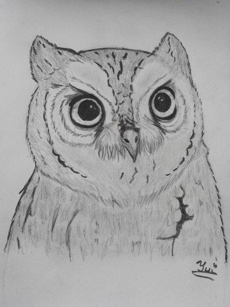 Моя подруга нарисовала Сову, срисовывала с пикабу фотографии. Отсканированный рисунок    Реальный рисунок (фотка)   - Изображение 1
