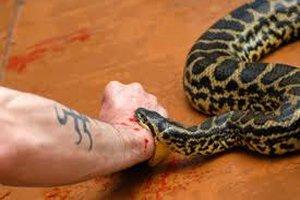Про психологический барьер и ядовитых змей - Изображение 1