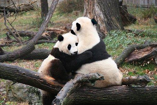 Творчество одинокой панды :) - Изображение 1