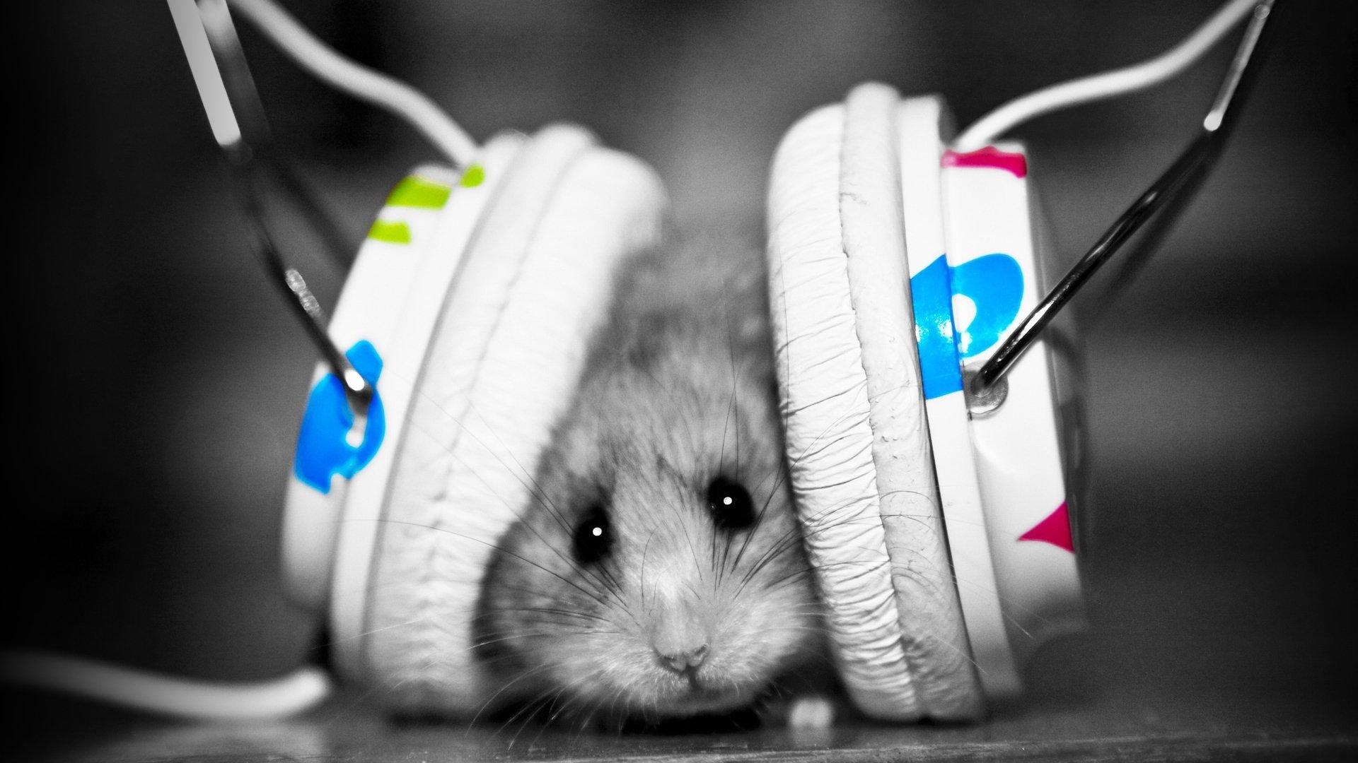 Эксперты составили рейтинг преданности музыкальным жанрам - Изображение 1