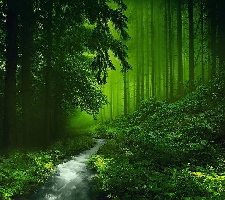 Чем дальше в лес, тем круче партизаны - Изображение 2