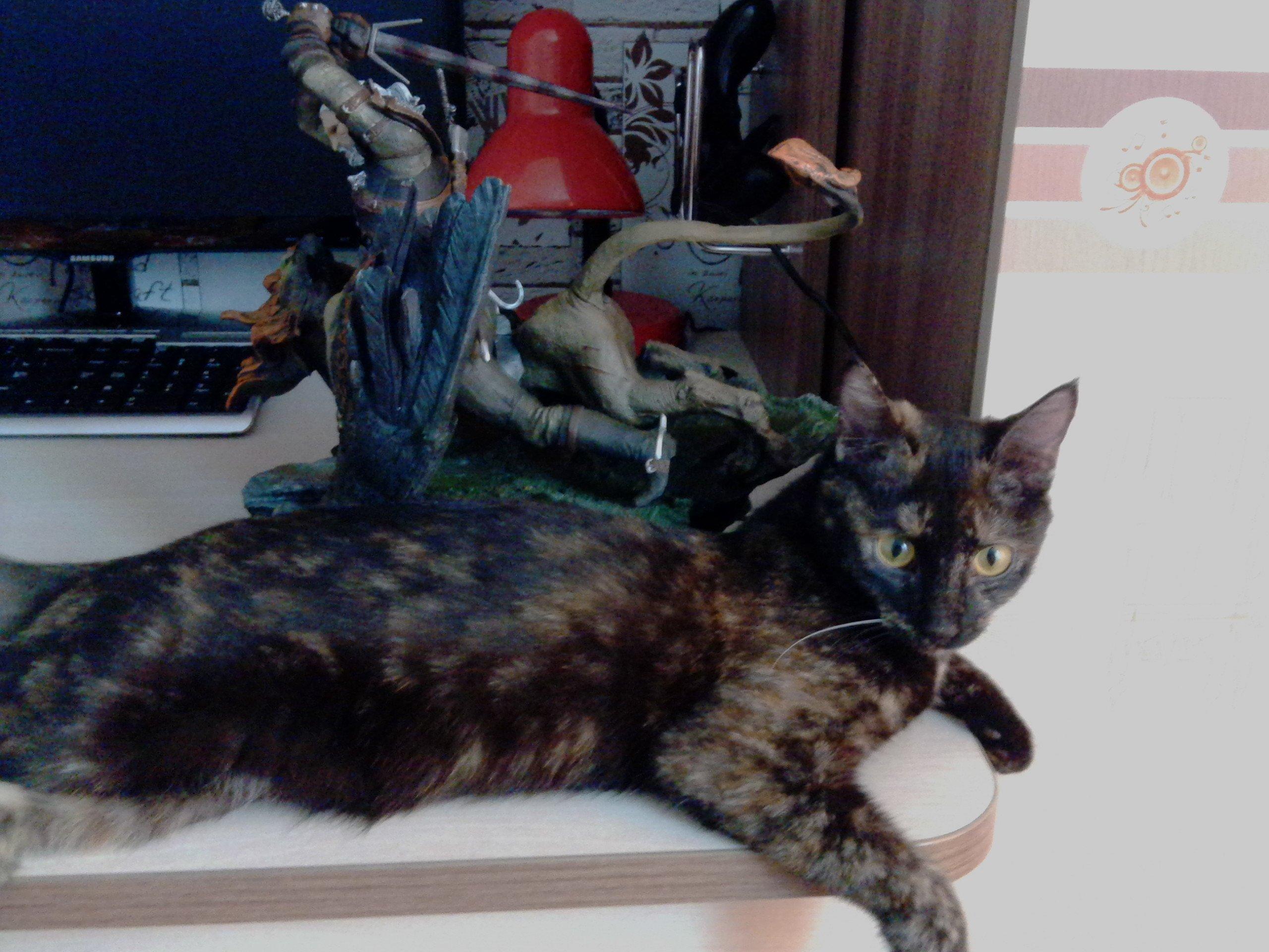 The Witcher 3: Wild Hunt. Распаковка коллекционного издания игры!     После долгого и томительного ожидания, сквозь  ... - Изображение 48