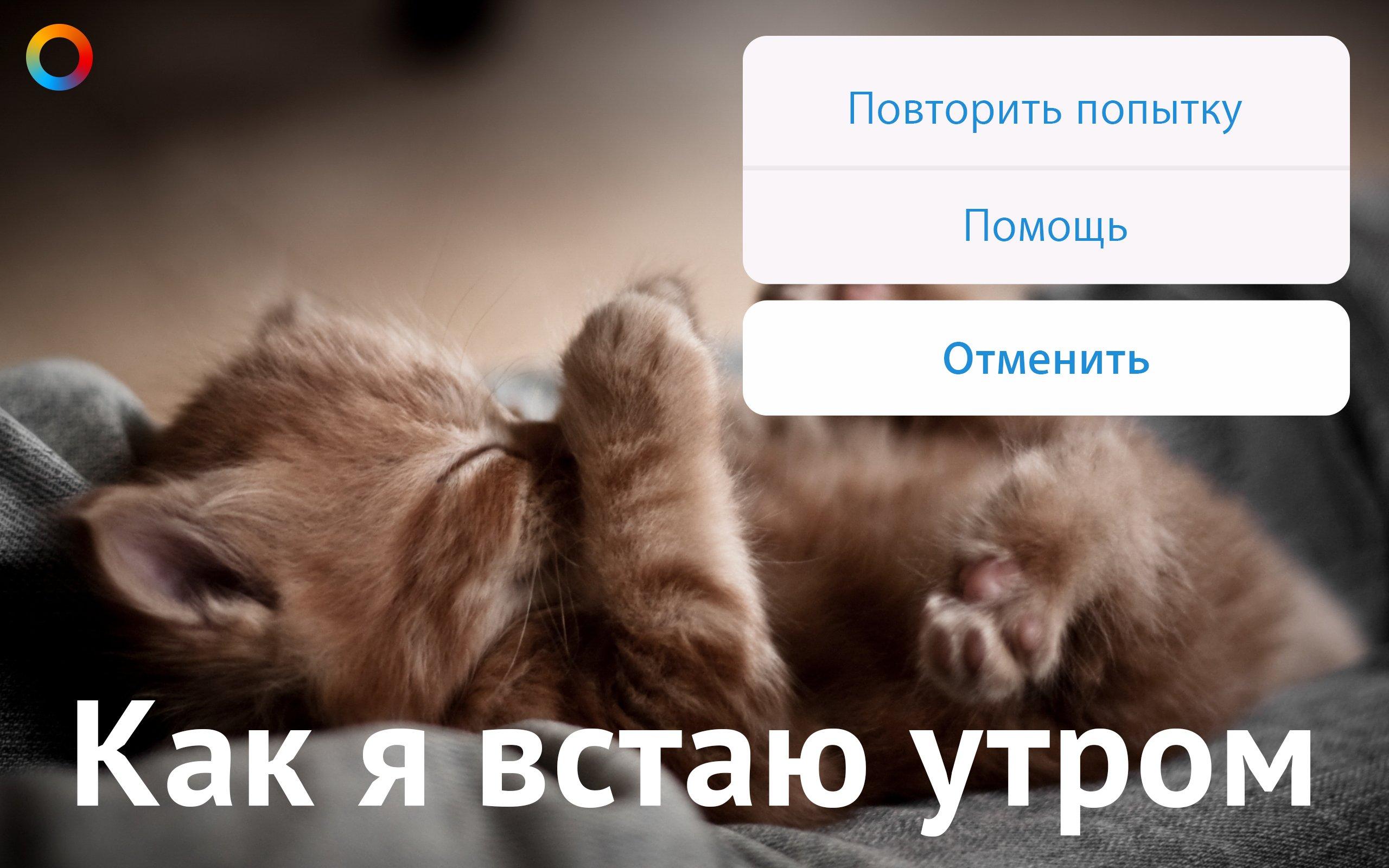 Пятница! Котики!. - Изображение 4