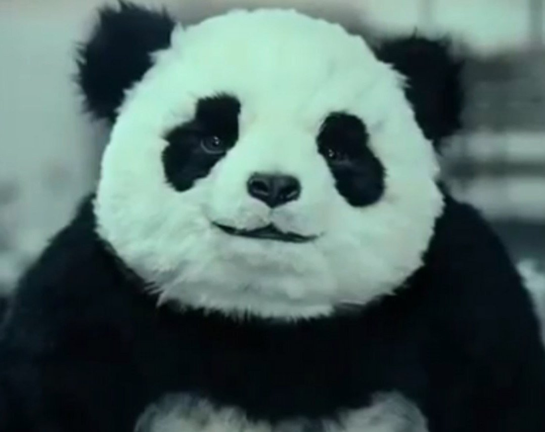 Спасем панду - Изображение 1