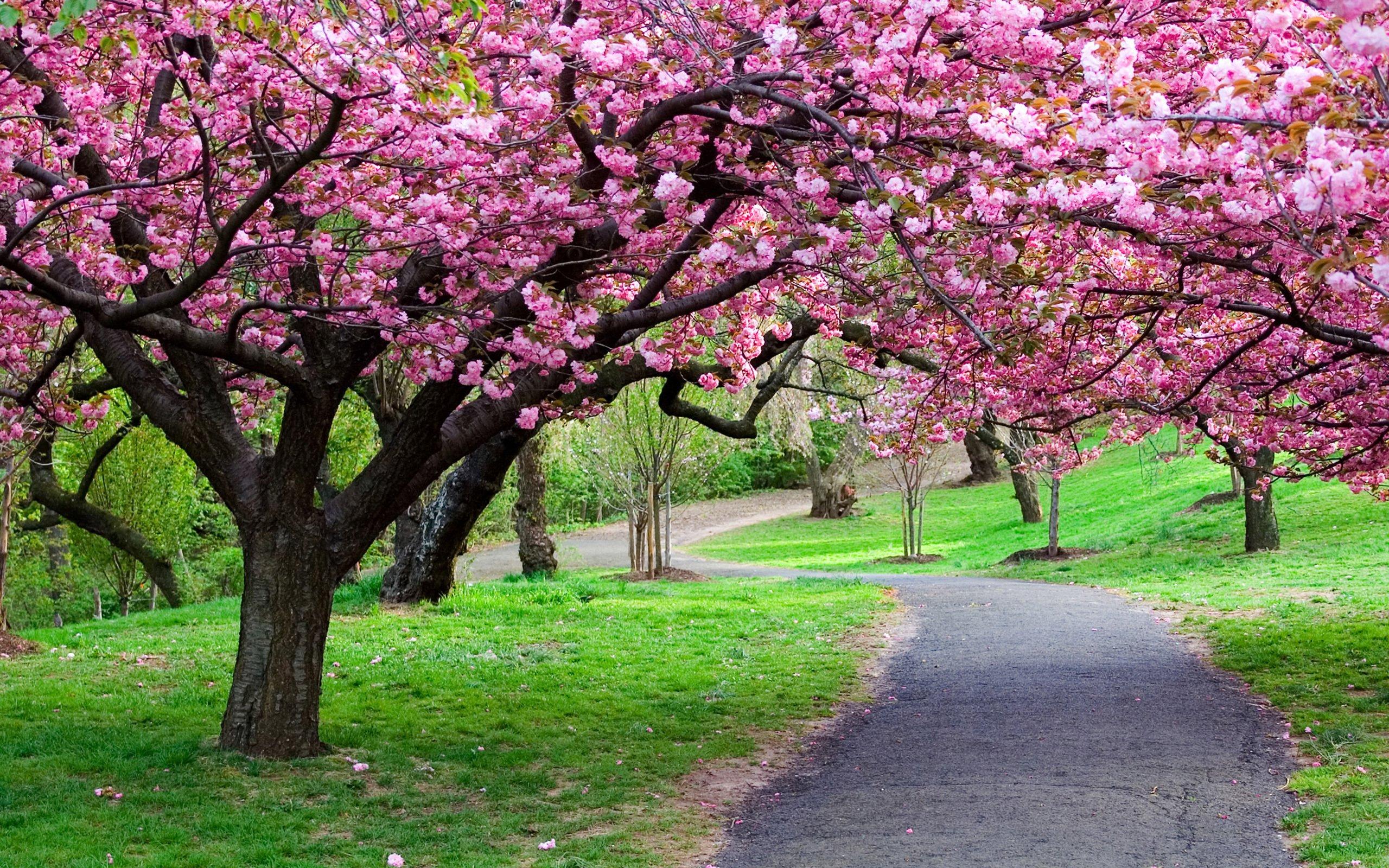 Весна... Подборка фото.  - Изображение 16