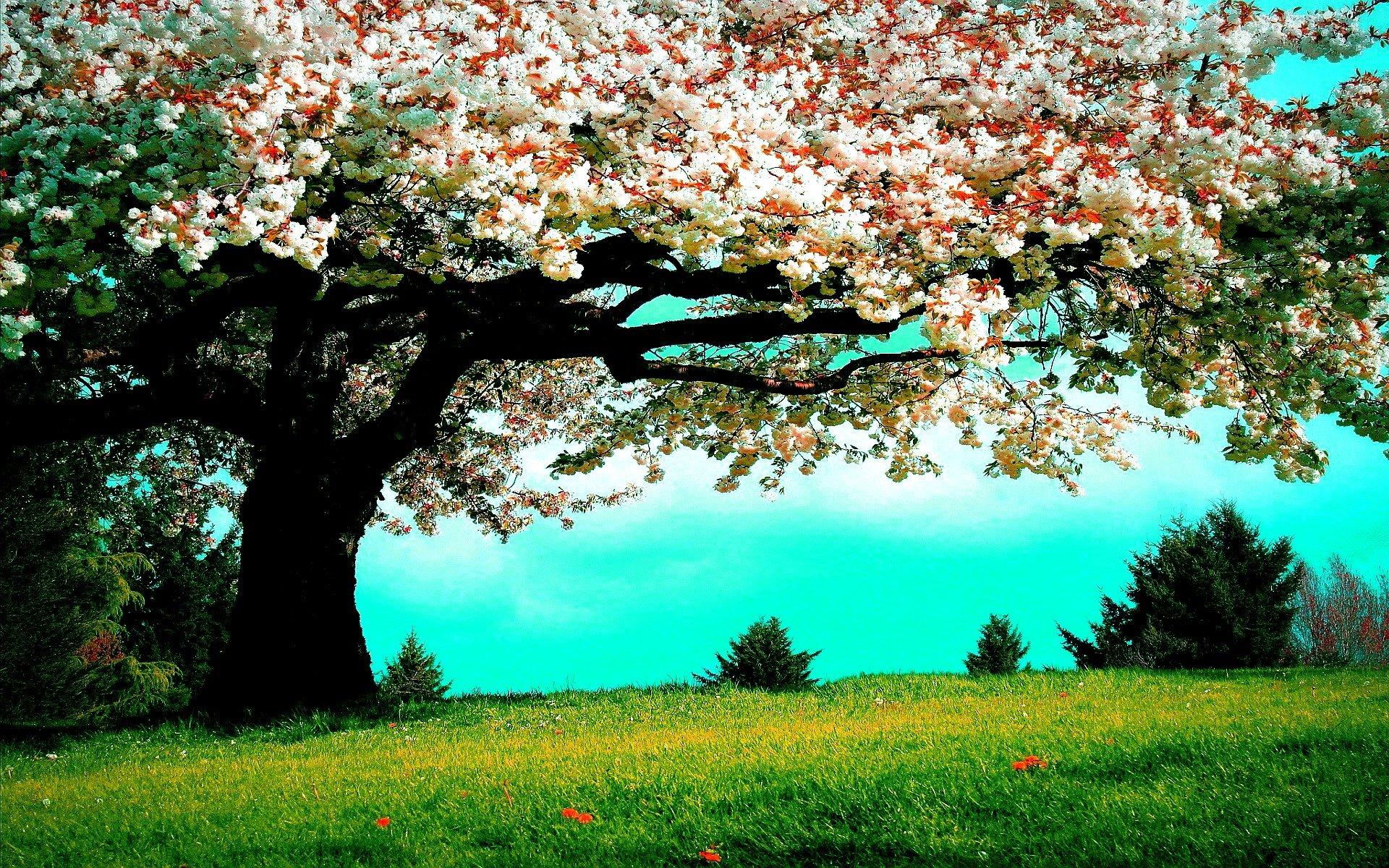 Весна... Подборка фото.  - Изображение 2