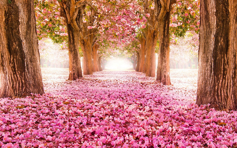 Весна... Подборка фото.  - Изображение 15