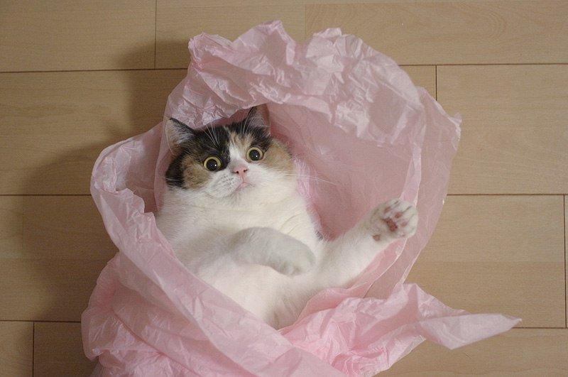Международный День Кошек. И котов. - Изображение 1