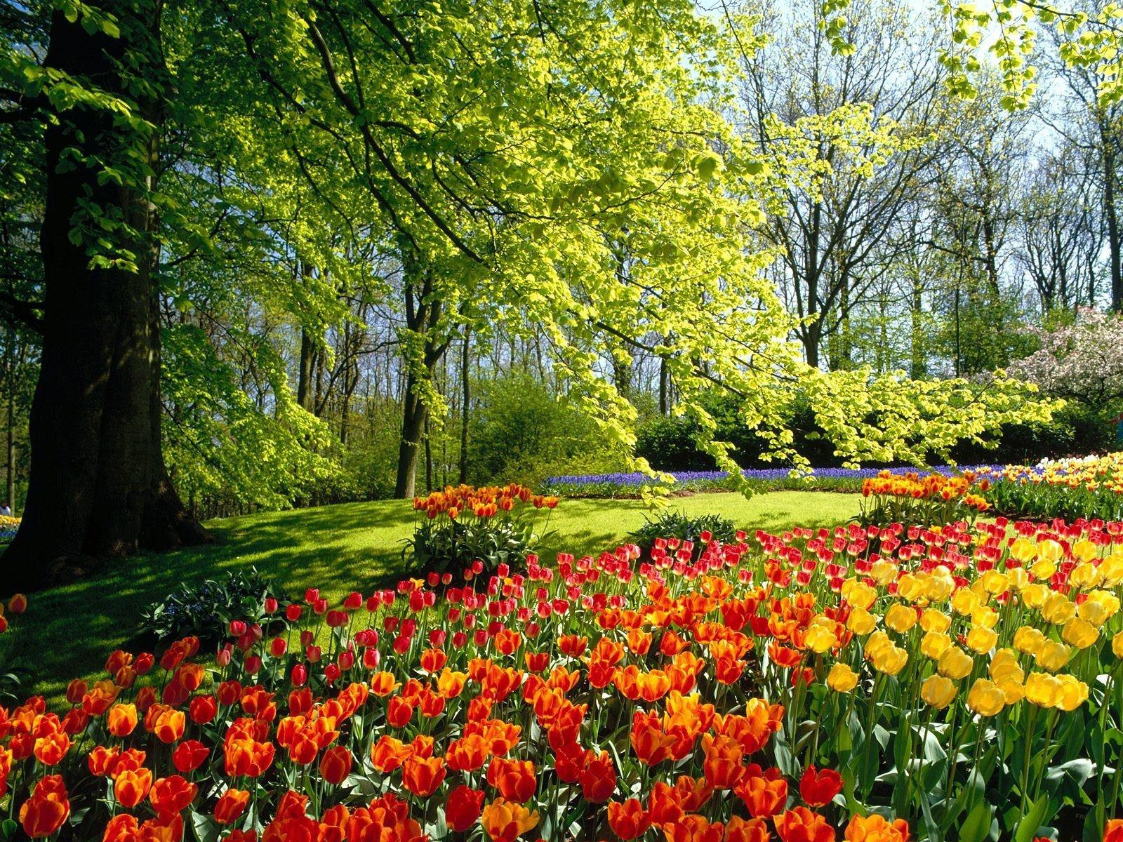 Весна... Подборка фото.  - Изображение 11