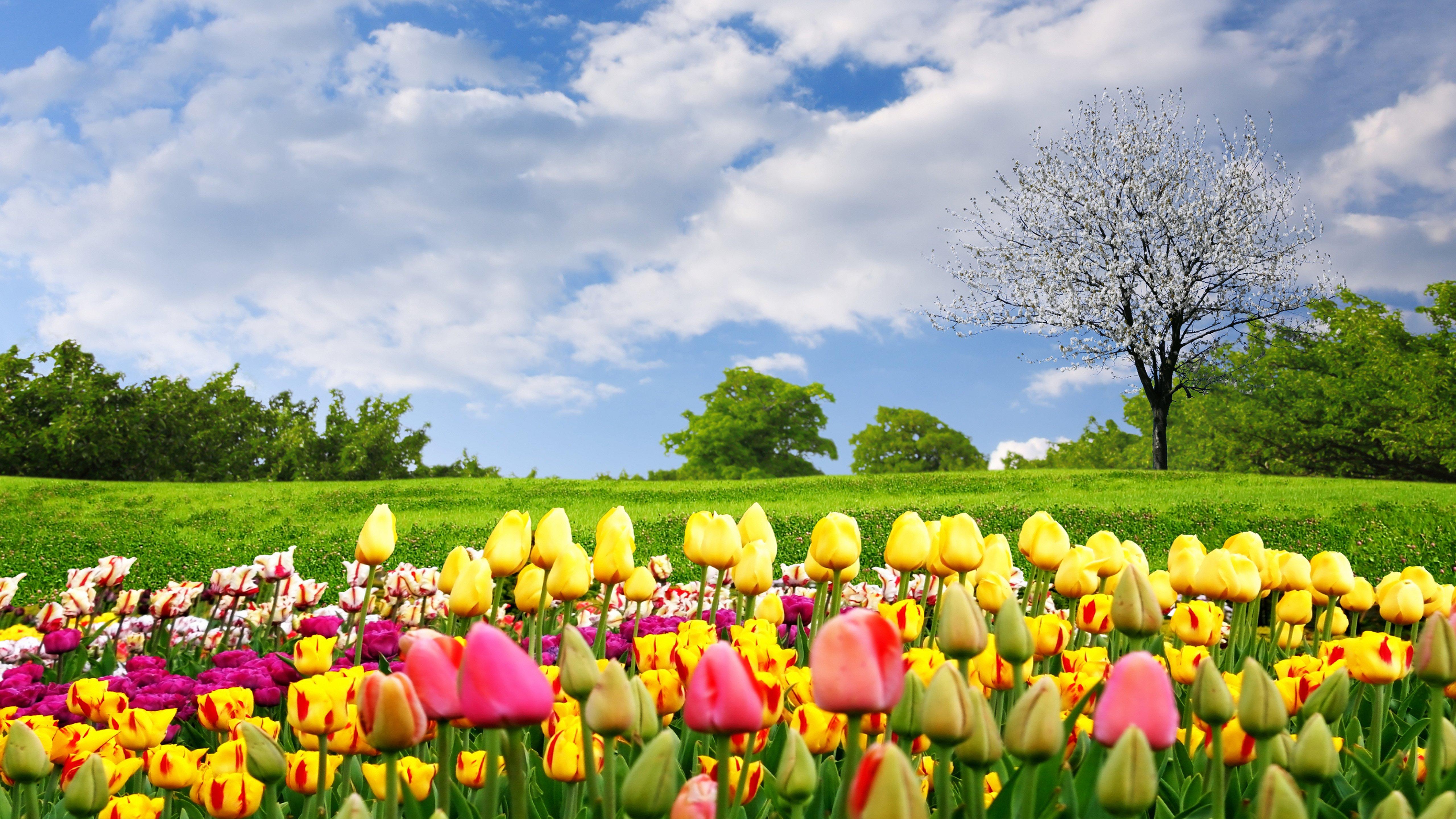 Весна... Подборка фото.  - Изображение 12