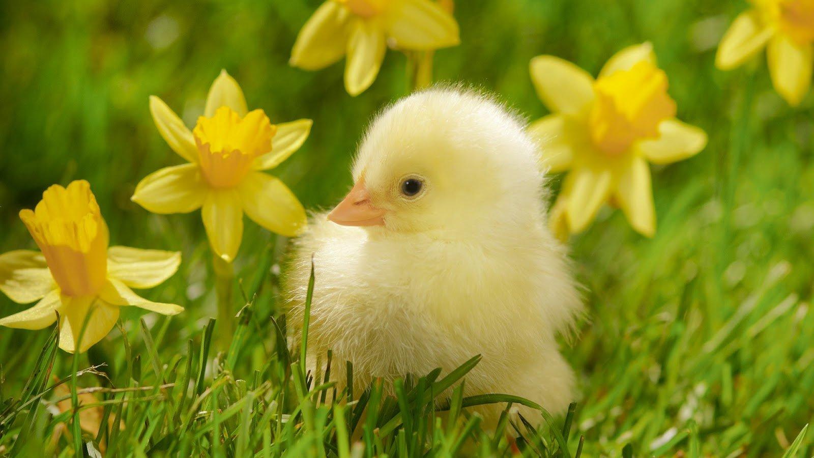Весна... Подборка фото.  - Изображение 22