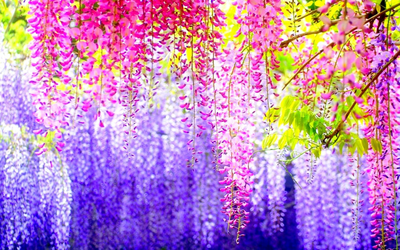 Весна... Подборка фото.  - Изображение 18
