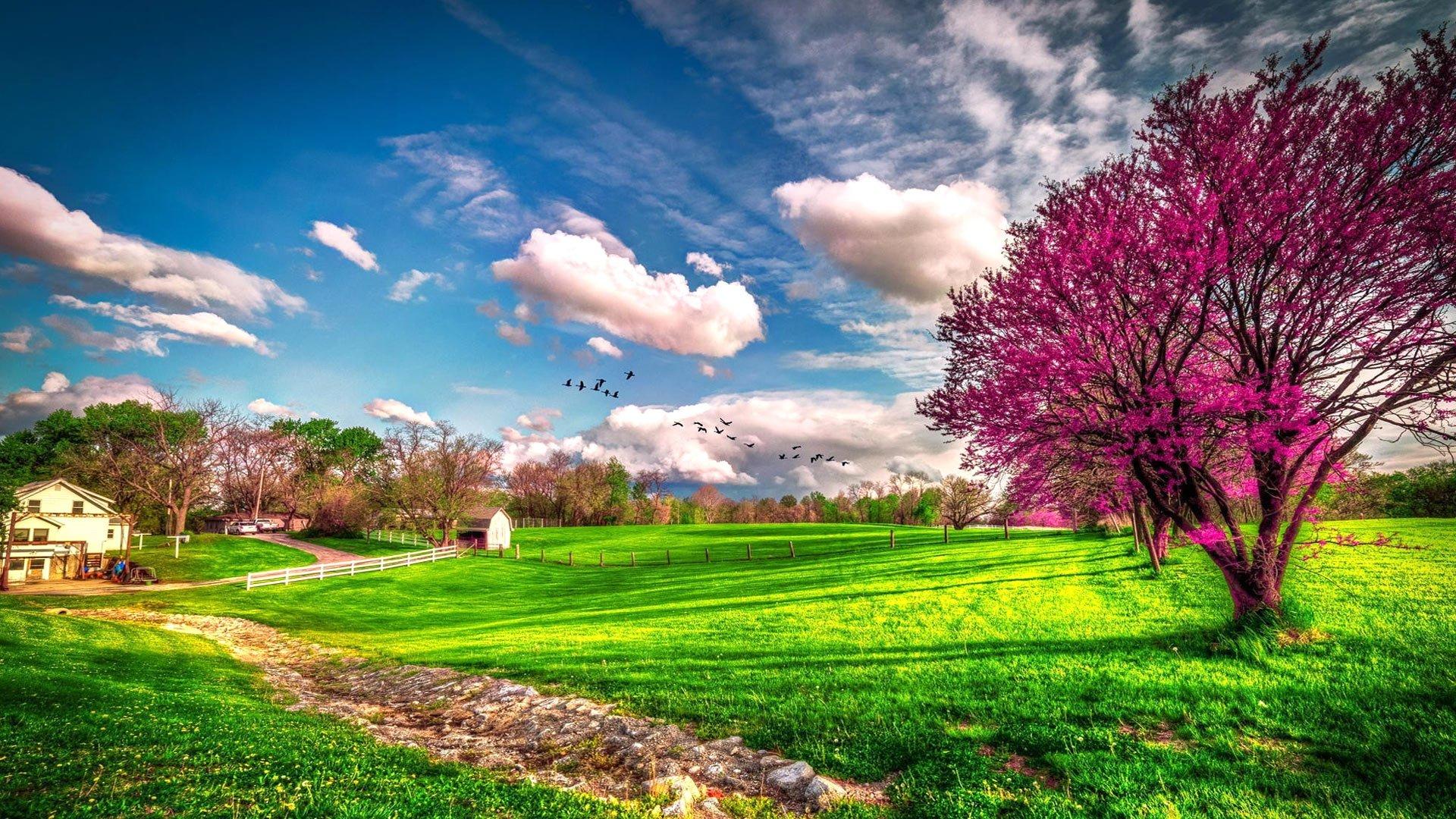 Весна... Подборка фото.  - Изображение 7