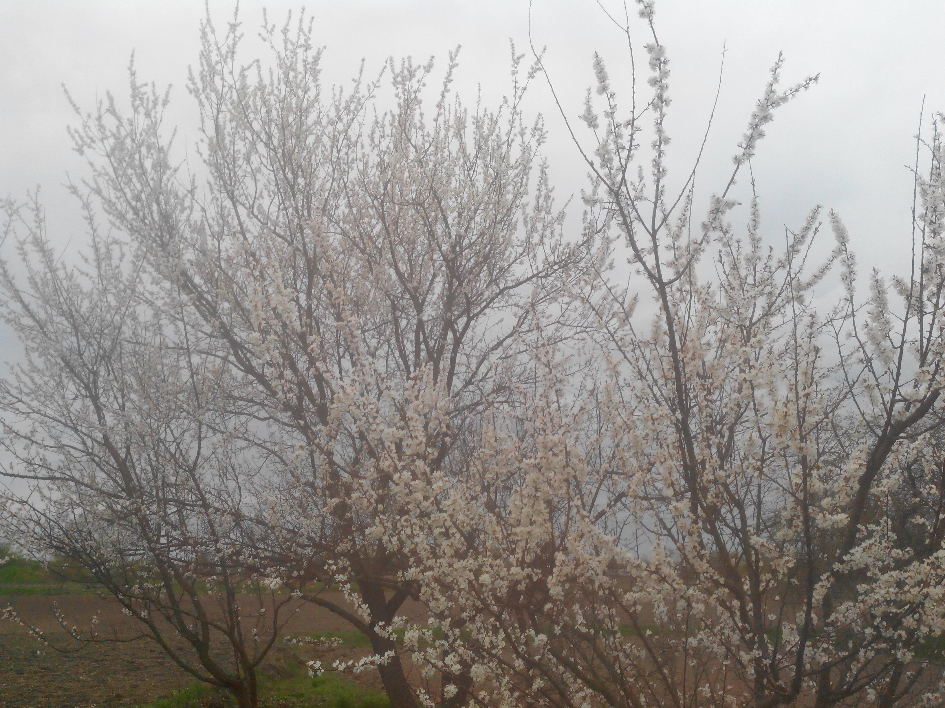 Весна! - Изображение 1