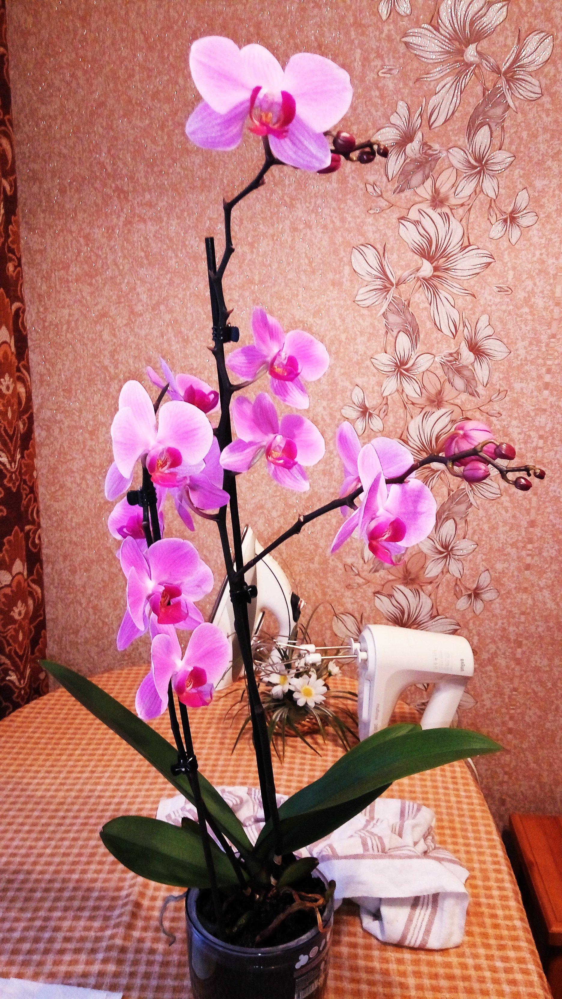 Спасение орхидейки - Изображение 25