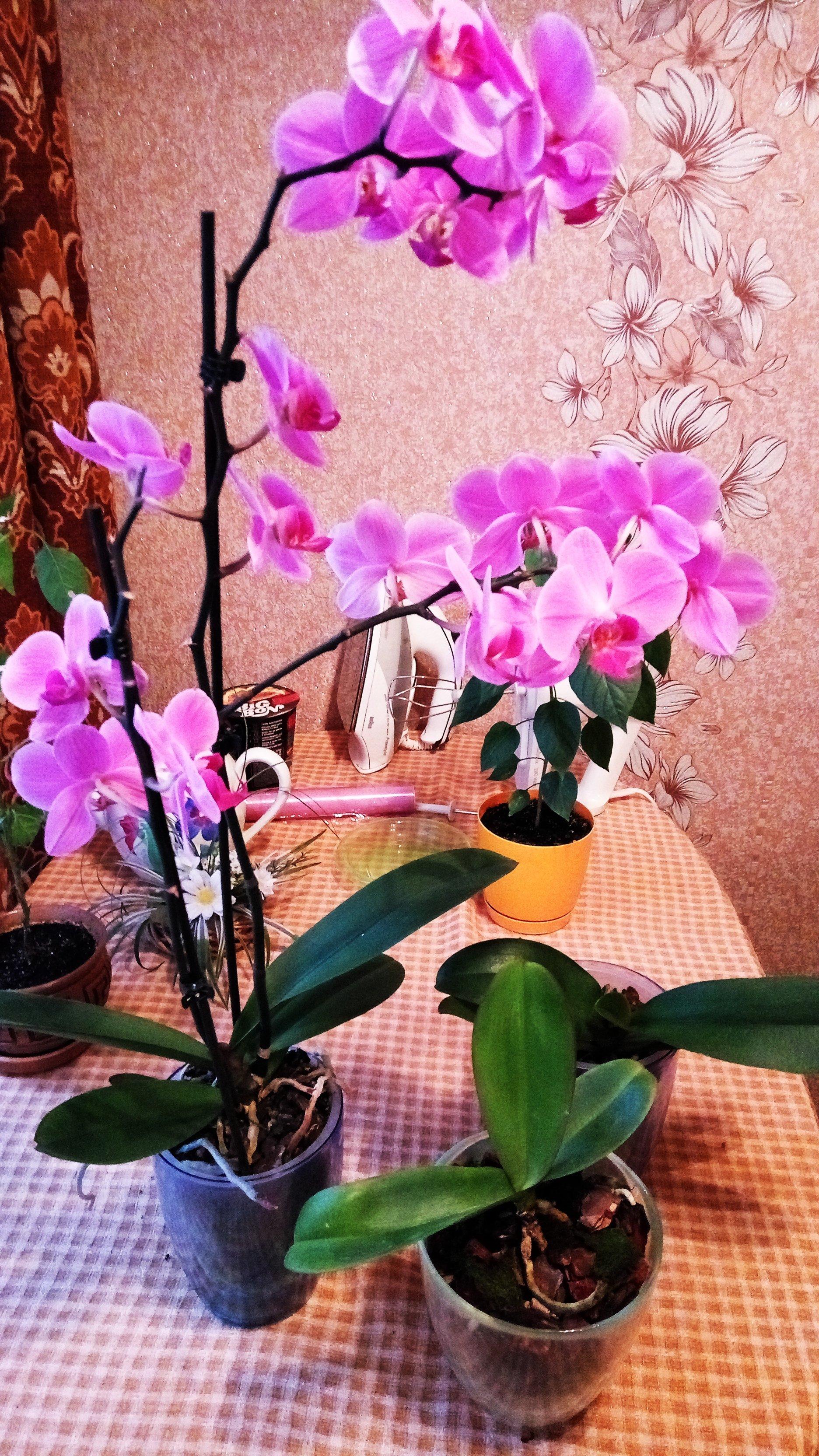 Спасение орхидейки - Изображение 24