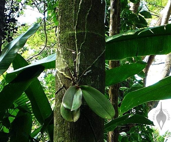 Спасение орхидейки - Изображение 2