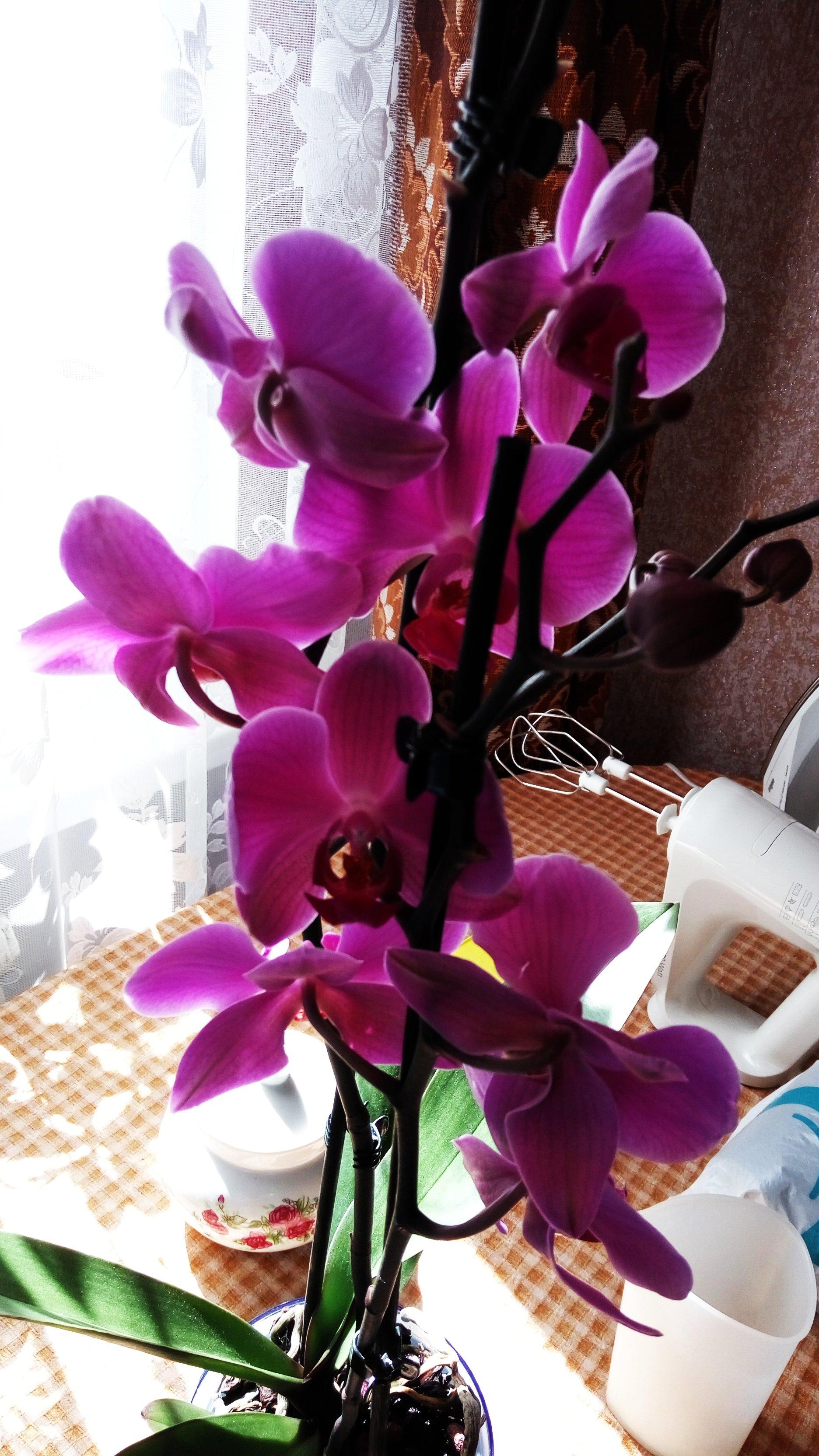 Спасение орхидейки - Изображение 27