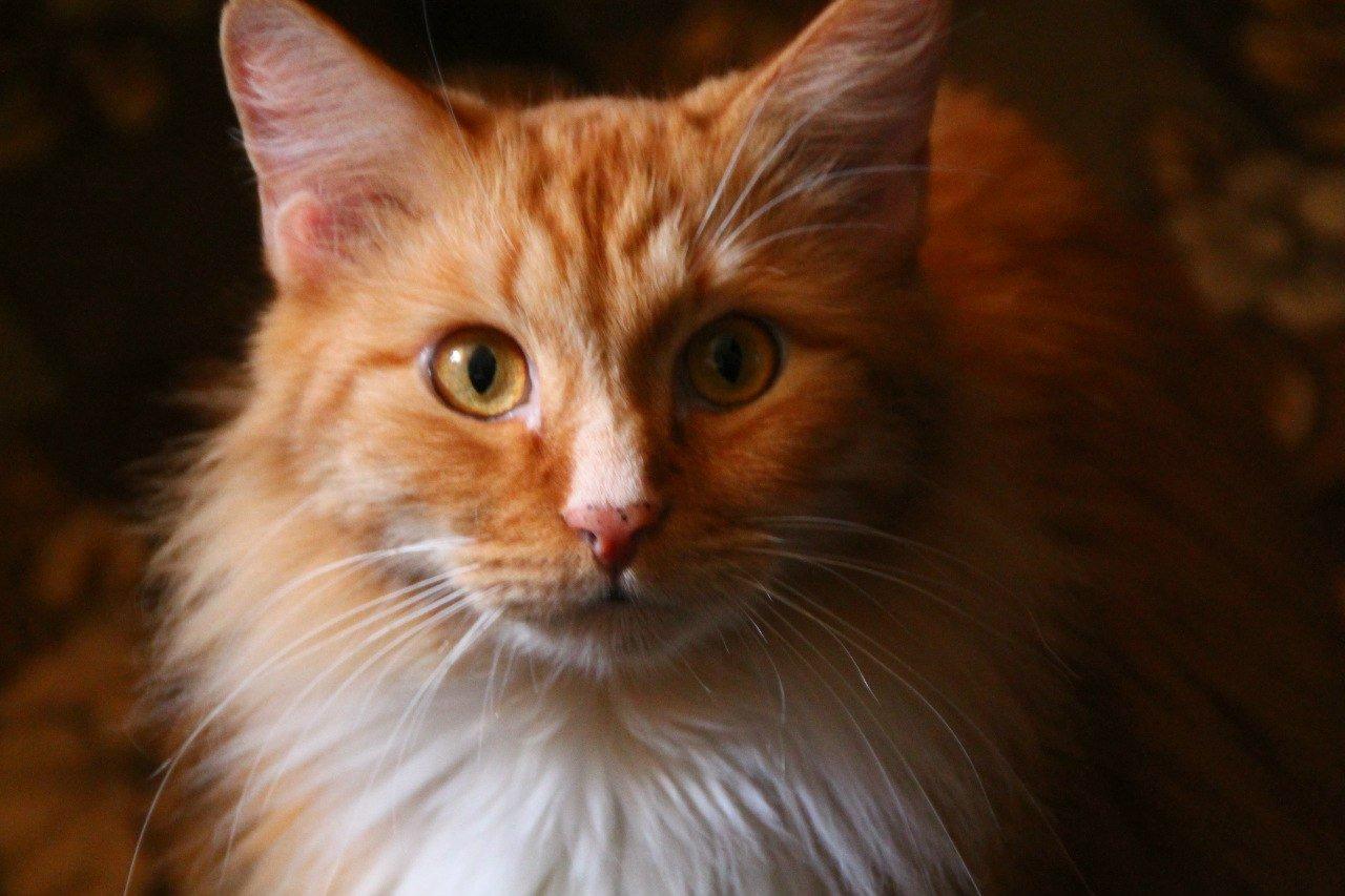 Красавчик.Да я горжусь своим котом,хоть он и не ловит мышет,но такой милый)) - Изображение 2