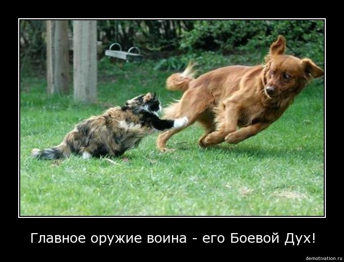 Смелость не имеет границ... - Изображение 1