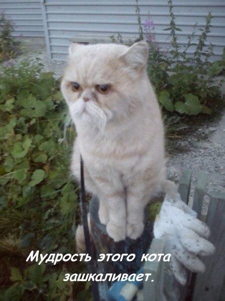 И снова кот...) - Изображение 1