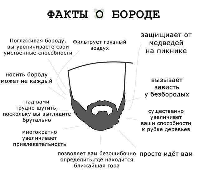 Бороду хочу  - Изображение 1