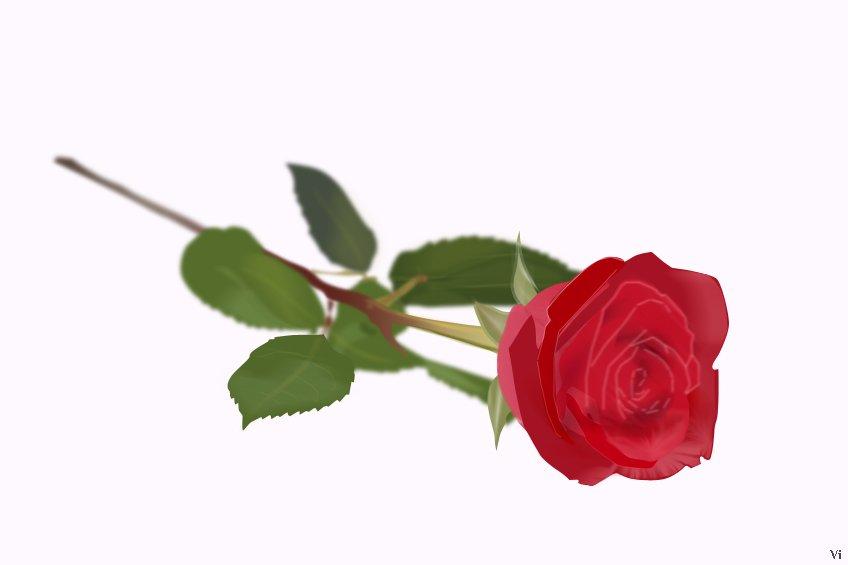 Всех девушек, которые бывают на канобу, с 8 марта. Вот, нарисовал вам розу. :D - Изображение 1