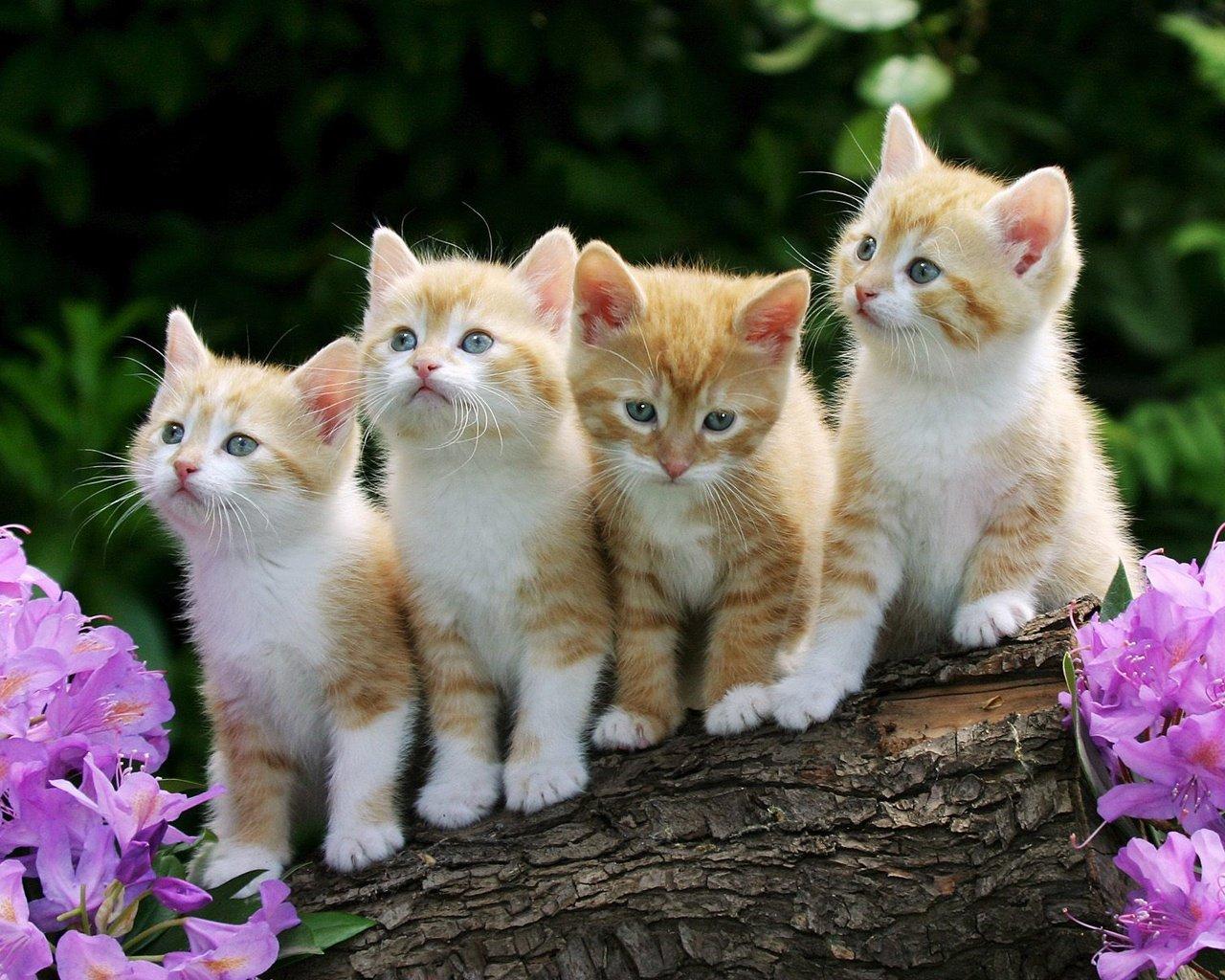 Четыре рыжих :)) - Изображение 1