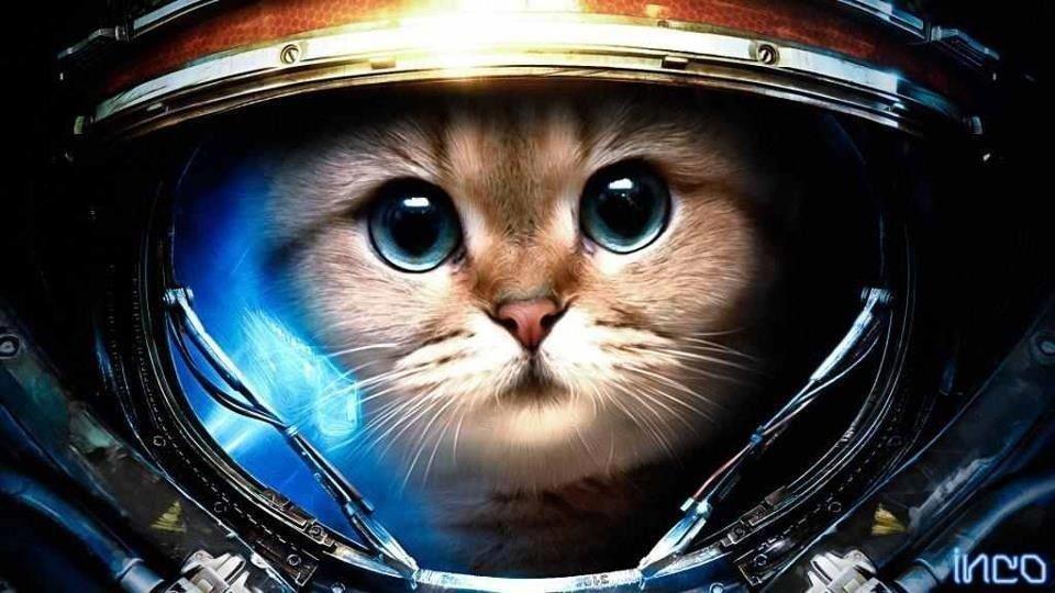 Всем StarCraft  и котиков! - Изображение 1