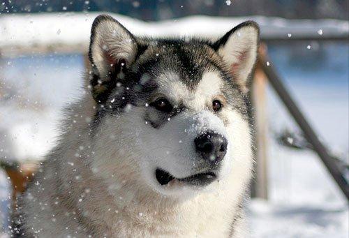 #WatchDogsKonkurs   Нано-технологичный пёс Эйдена, по кличке Спайк. Он живое существо, но его можно назвать девайсом ... - Изображение 1