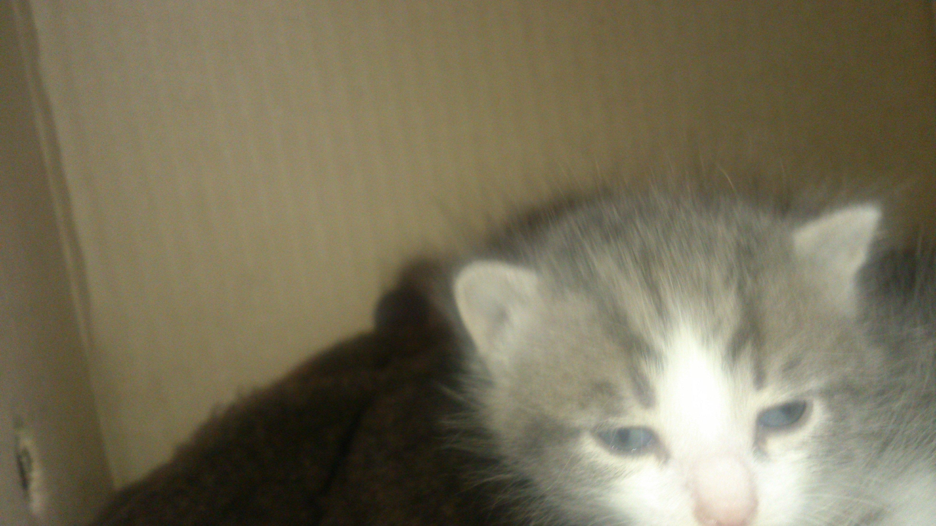 Отдам двух котят, тому кто проживает в ближнем подмосковье на востоке. Котята очень маленькие, едят с пипетки, но вс ... - Изображение 1